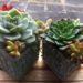 セリアのブロック鉢に寄せ植え☆成長がスゴい白牡丹&エメラルドリップ